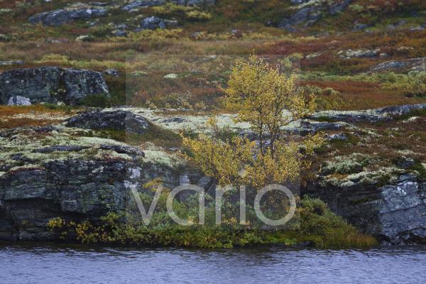 Herbst in Jotunheimen