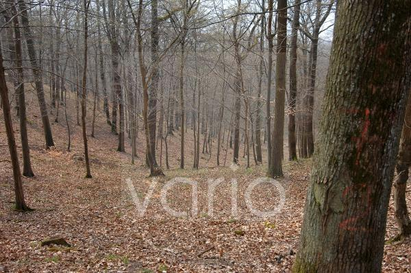 Wald befindet sich noch im Winterschlaf