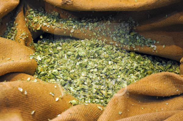 ein Sack von Hopfen, Humulus lupulus, zur Bierherstellung
