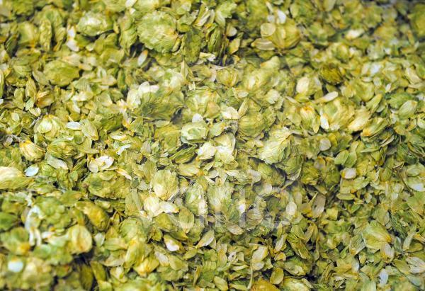 getrockneter Hopfen, Humulus lupulus, zur Bierherstellung