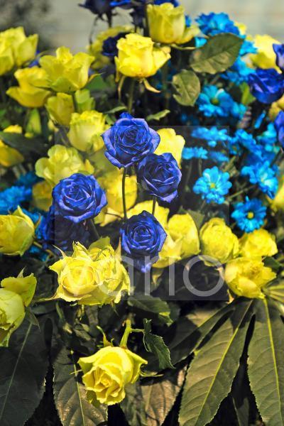 blaue und gelbe Rosen, Rosa, in einem Blumengesteckt