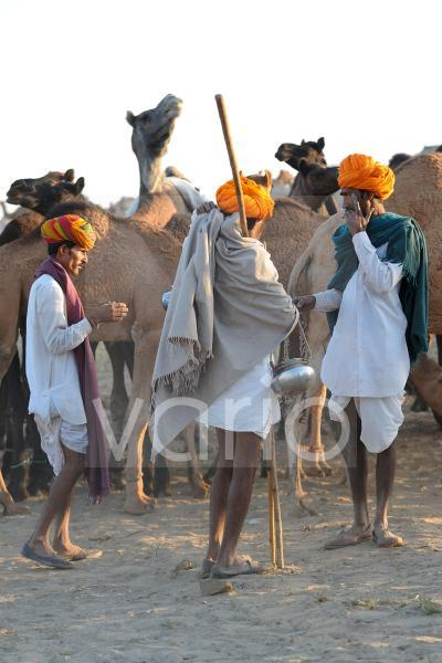 Camels herdsmen watching their herds