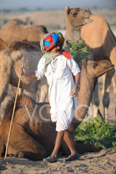 Camel shepherd and his herd
