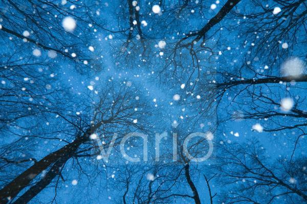 Fallende Schneeflocken im winterlichem Wald