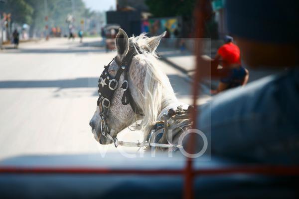 Pferdekutsche in Bayamo, Kuba, Große Antillen, Karibik