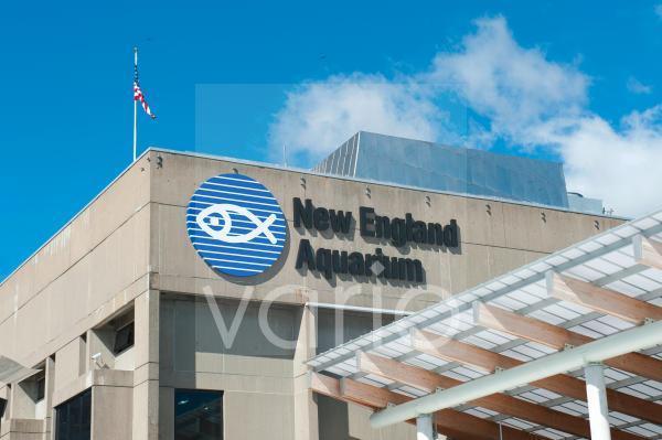 New England Aquarium, Boston, Massachusetts, Neuengland, USA, Nordamerika, Amerika
