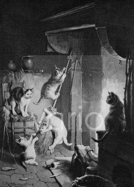 Walpurgisnacht der Katzen, historischer Stich, 1883