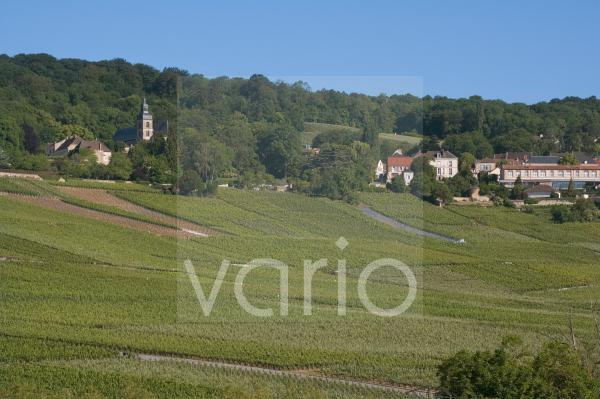 Champagne vineyards, Hautvillers, Marne valley, France, Europe