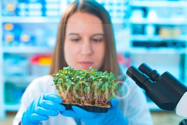 Female biologist holding seedlings