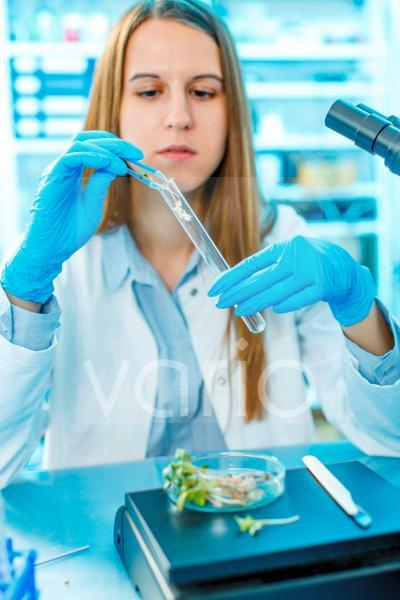 Female biologist testing plants in lab