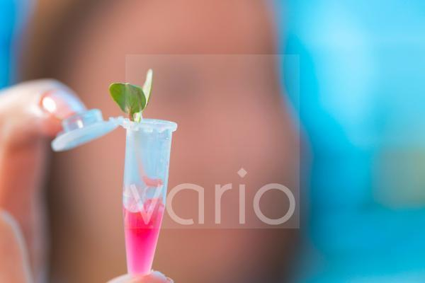 Seedling growing in an eppendorf tube