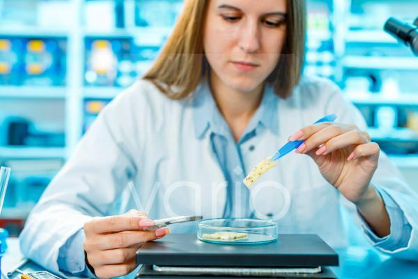 Scientist testing cheese sample