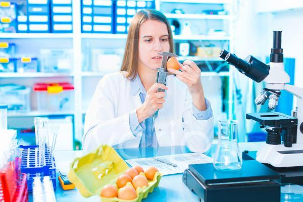 Scientist testing an egg in a lab