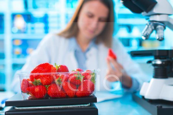 Scientist testing strawberries in a lab