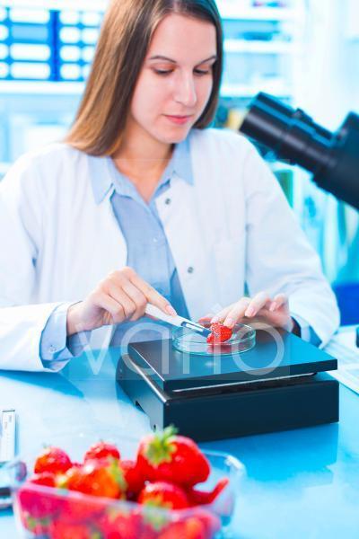 Scientist testing strawberries