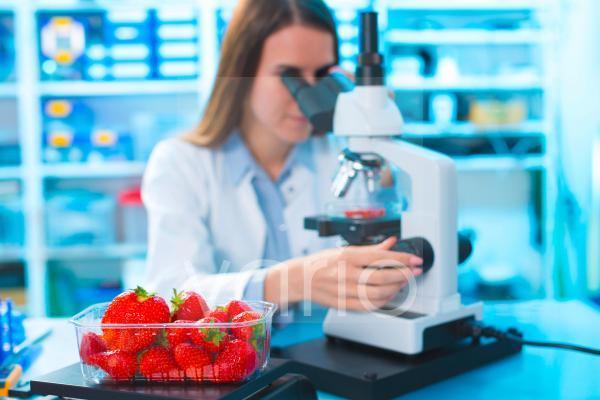Scientist studying strawberries
