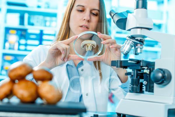 Scientist studying mushroom