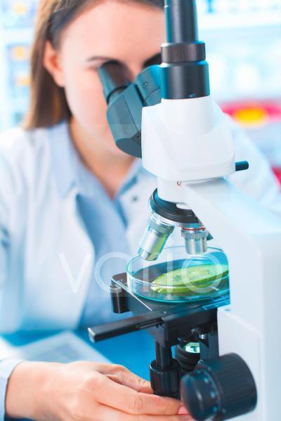 Scientist studying cucumber
