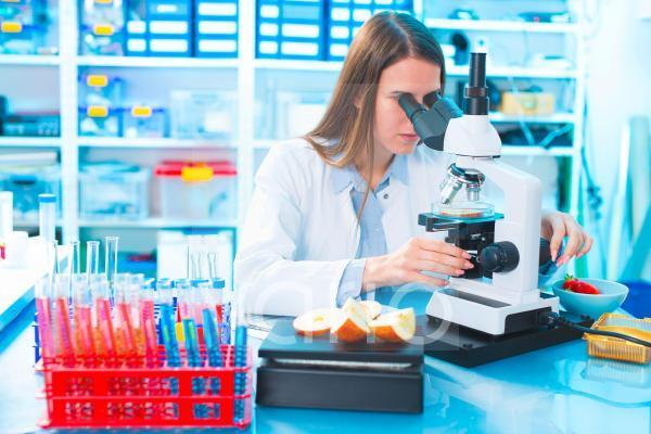 Scientist studying food samples