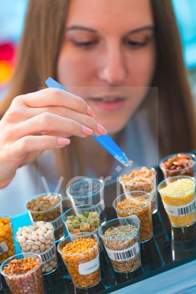Scientist studying legumes in lab