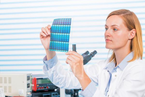 Technician holding silicon wafers