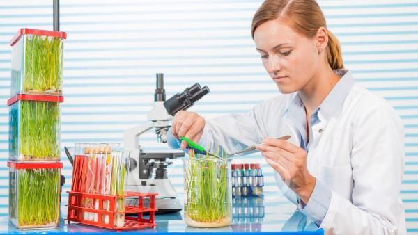 Technician working in lab with plants