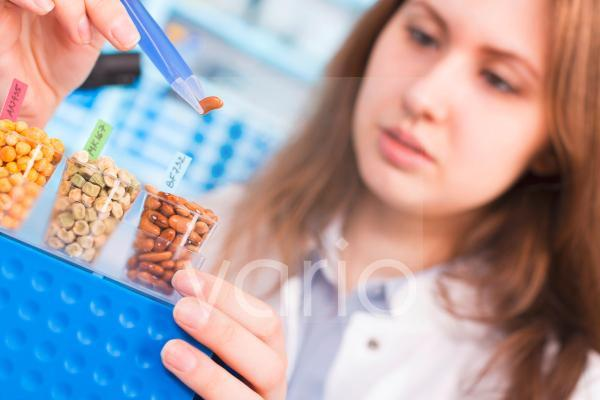 Lab technician testing legumes in lab