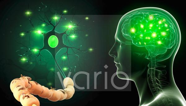 Human nerve cell, illustration