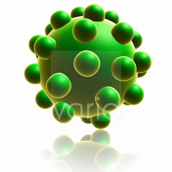 Chickenpox virus, illustration