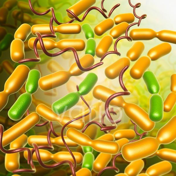 Yersinia pestis bacteria, illustration