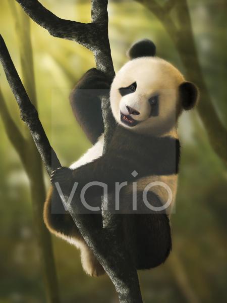 Artwork of Juvenile Giant Panda