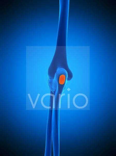 Elbow bursa, illustration