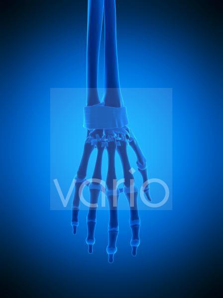 Hand ligaments, illustration