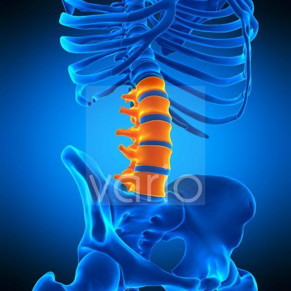 Lumbar spine, illustration