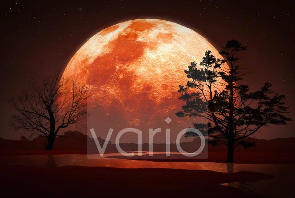 Artwork of Moon Behind Trees
