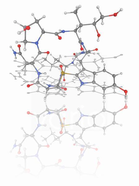 Alpha-Amanitin toxin molecule