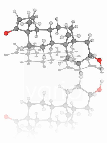 Androsterone hormone molecule