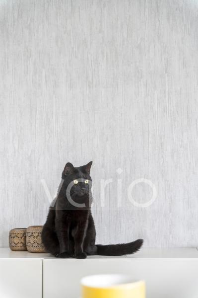 Cat sitting on sideboard at home