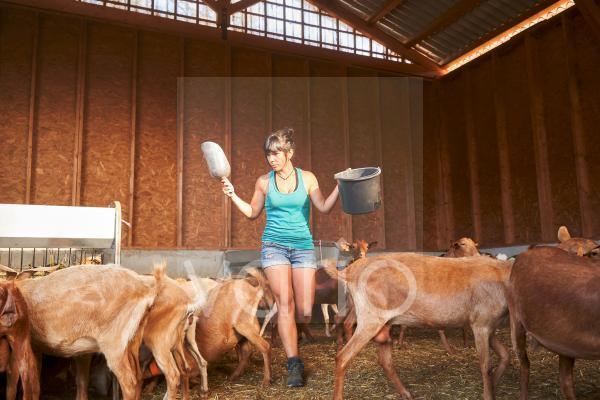 Female farmer walking amidst goats at farm