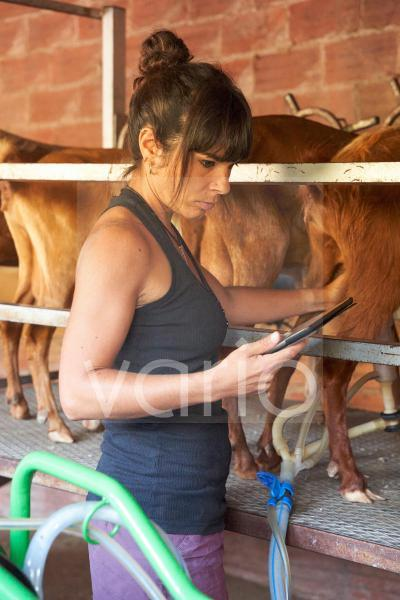 Female farmer using digital tablet in goat farm