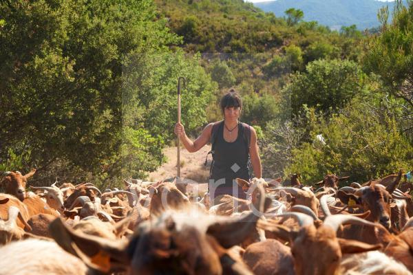 Female farmer with walking cane amidst goats hiking on sunny day