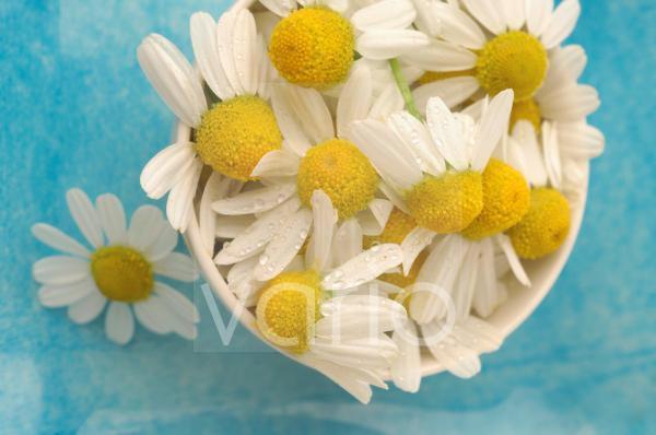 Kamillenblütten in einer Schale