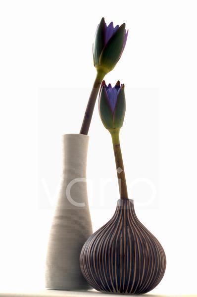 Zwei blaue Blüten in Vasen