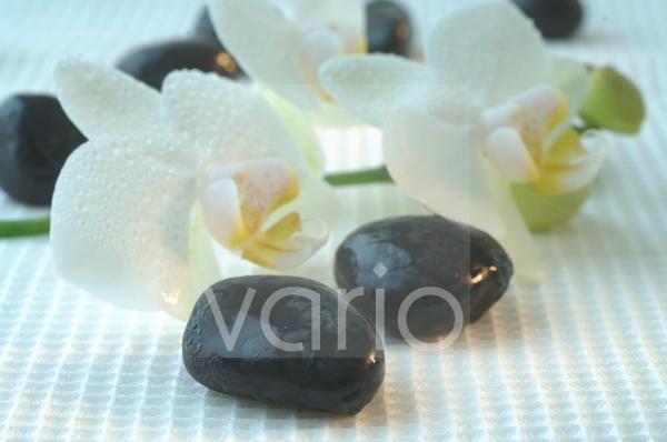 Steine und Orchideenblüten