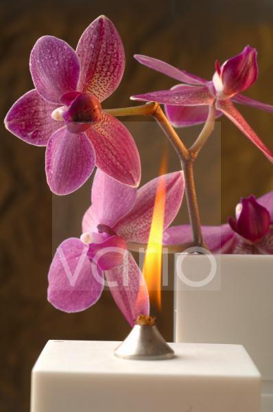 Duftöllampe mit Orchideenblüte