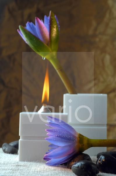 Duftöllampe und blaue Blüten