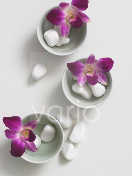 Blüten dekoriert in Porzellanschälchen und mit Kieselsteinchen
