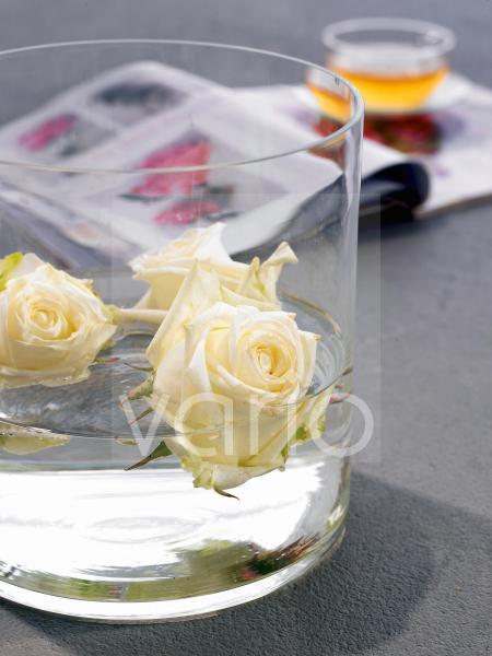 Schwimmende; weiße Rosen