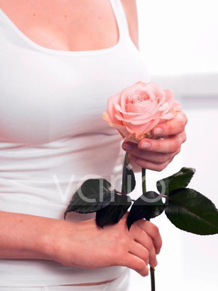 Rosa Rose in der Hand
