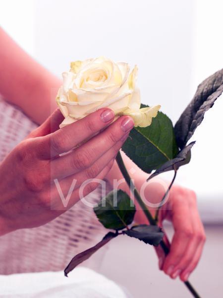 Weiße Rose - mit Hand